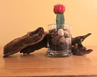 Driftwood with catus planter
