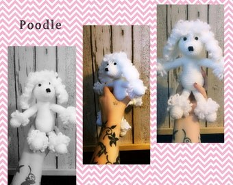 Poodle teddy