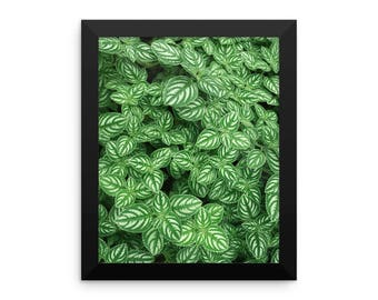 Vibrant Green Nature  Photographic Framed Poster