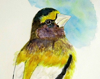 Cute finch Bird art watercolor Original painting