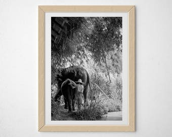 Elephants and Mahout, Thailand, photography, black and white, wildlife, wall art, world travel art, 5x7, 8x10, 11x14, 16x20, giclee