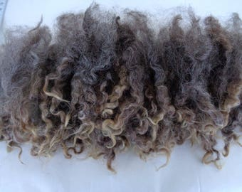 0.7oz  wensleydale locks, light gray brown curls, felting wool, locks, light grey brown dolls hair,curls, spinning fiber, 20g, Lot -F-