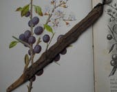 Natural, Knotted Somerset Blackthorn Wood Wand Pendant - Protection - Pagan, Wiccan, Witchcraft, Ogham