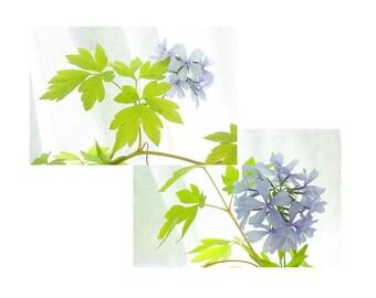 Blue Phlox Print Set, Flower Photography, Floral Art Print, Blue Chartreuse Wall Art