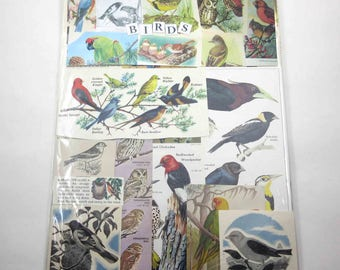 Bird Ephemera Pack 65 Pieces of Vintage Bird Ephemera for Altered Art