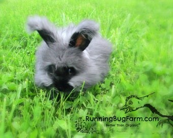Cruelty Free Black Angora Fiber Rabbit Wool Natural English Angora Rabbit Spinning Fibers Fur Not Cut Wool from our Bunny Black Bramble