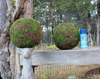 """Save25% CLEARANCE:Moss Balls-Topiary Balls-Scattered Moss and Angel vine balls-6"""" and 8""""-Beautiful Hand made ball of Preserved Moss-Wedding."""