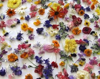 Bulk Dried Flower Confetti, Wedding Confetti, Bulk Confetti, Table Decor, Aisle Decoration, Flower Girl, Dried Flowers, Rose Petals, 24 Cups