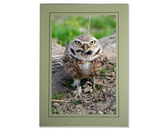 Burrowing Owl Cards - Bird Photo Cards - Burrowing Owl Photos - Cards of Burrowing Owls - Handmade Owl Card