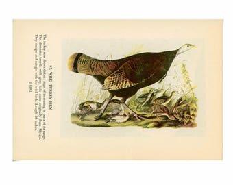 c.1950 WILD TURKEY BIRD print - bird lithograph - turkey hen with chicks original vintage print - whooping crane on reverse - thanksgiving