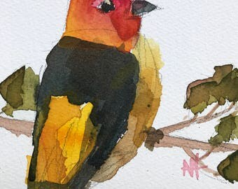 Western Tanager no. 15 Original Watercolor Bird Painting by Angela Moulton