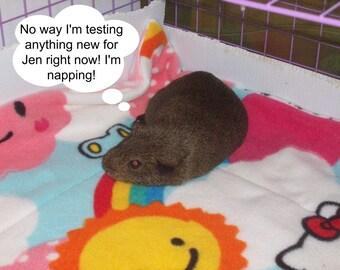 Custom Order Cage Set for Guinea Pig Hedgehog Small Animals