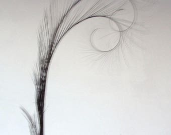 Millinery Feathers - Double burnt curled pheasant feathers - black