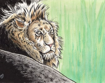 Lion ink and watercolor painting