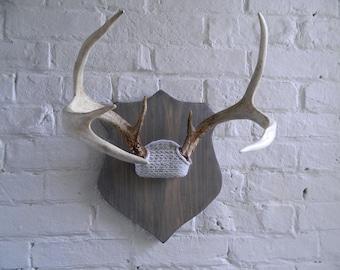 Vintage Mounted Deer Antlers - Repurposed