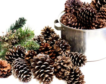 Pine Cone Assortment, Variety of Pinecones, Nature Findings, Woodland Rustic Cabin Decor, Basket Bowl Fillers, Craft Supply itsyourcountry