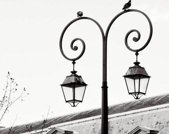 Black and White Photograph Print - Paris Street Lights with Birds