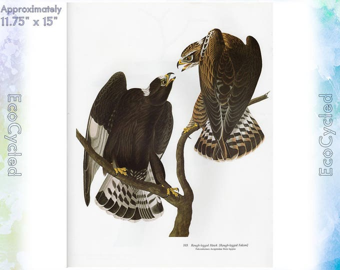 Rough-legged Hawk Birds of America Vintage Art Print Nature Vintage Paper Ephemera John James Audubon Baby Elephant Folio frameable 58
