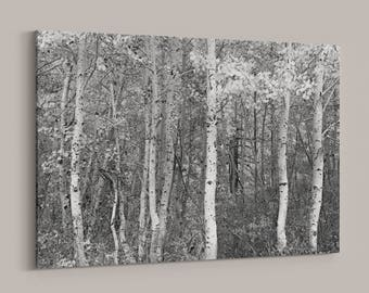 Aspen Forest Landscape, Canvas Wrap, Black and White Photography, Woodland