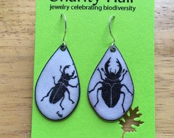 Stag Beetle Enamel Earrings