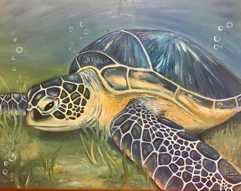 Sea Turtle Chilling