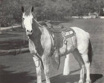Soapsuds - Vintage 1930s Favorite Roping Horse Real Photo Postcard