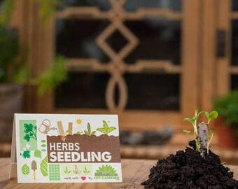 "Seedling ""Kräuter"" - seed sticks in a matchbook-like packaging. The herb garden for your pocket"