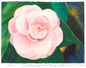 PETER BLAKE - 'Camellia japonica 'Incarnata'' - hand signed & numbered silkscreen print - c2013 (edition of 250)