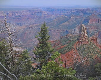 Grand Canyon Photo | North Rim Grand Canyon Art | Arizona Nature Photo | Tree Nature Art | POV Landscape Photo | Landscape Photography Art