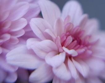 Pink flower photography print, dreamy flower art, girls room bedroom wall decor, floral art print, Chrysanthemum photo print flower picture