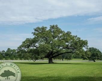 Landscape Photography | Majestic Tree | Digital Download