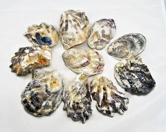 Oyster shells, 25 large dark shells. Seashells, seashell supply, craft shells, wedding decor, beach decoration, natural shells ,DIY shell