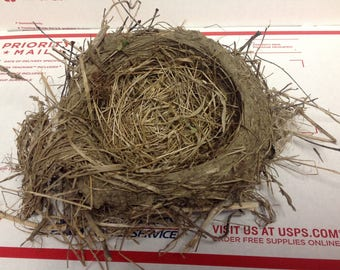 real bird nest straw & mud