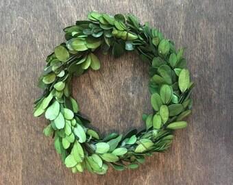 "6"" Preserved Boxwood Wreath"