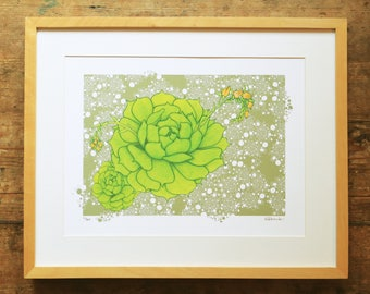 Echeveria plant limited edition A3 print