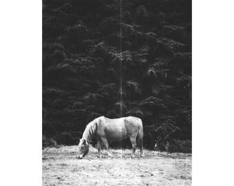 Black and White Vintage Horse Print, Vintage Print, Horse Portrait, Animal Print, Black and White Horse Photography