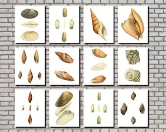 Sea Shells Prints Set 12 Posters, Vintage Flora & Fauna Prints, Set of 12 Restaurant Kitchen Wall Art Prints 0559