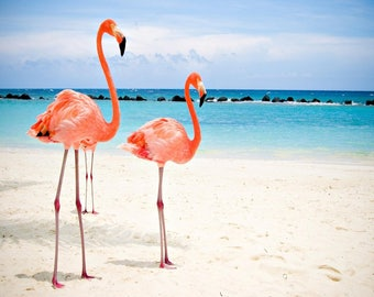 FLAMINGO FLAMINGOS  canvas print   12 inch x 16 inch  stretched wooden over frame  despatched from uk