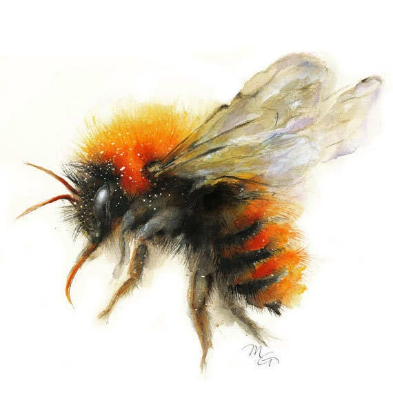 Bee Watercolor Painting Bumble Giclee Print Nature