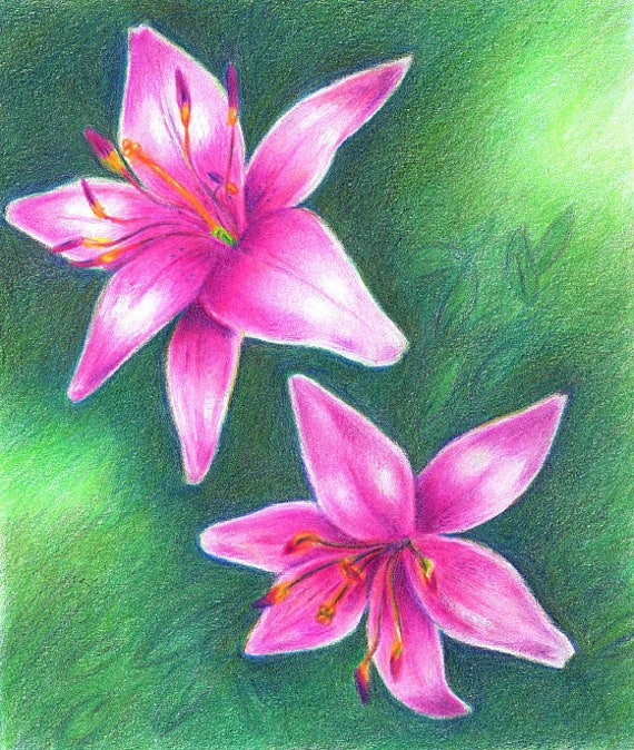 Colored Pencil - Custom Portrait or Drawing!  I will draw your loved one, flower, dog, cat, or any requested item