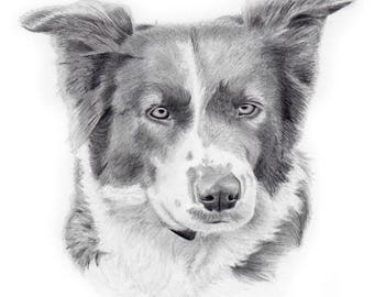CUSTOM PET PORTRAIT from your favorite photo, Original Art, Dog Portrait, Custom Pet drawing, Border Collie, Gift for her. Original Fine Art