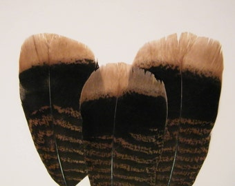 Wild turkey feathers, 8 piece turkey tail feathers, craft feathers, hat feathers, flower arranging feathers, turkey fan feathers