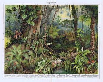 antique print jungle Tropical forest 1895