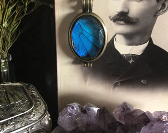Victorian Blue Swallowtail Butterfly Wing Pendant Necklace, Taxidermy, Insect Jewelry, Real Butterfly Jewelry, Gothic Jewelry, Memento Mori,