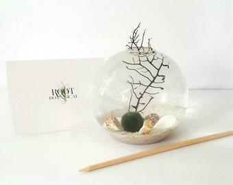 Marimo Moss Ball Globe Terrarium, Marimo Aqua Terrarium Kit