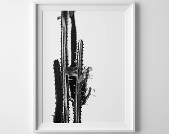 Cactus wall art Cactus poster Digital cacti print Cactus printable Cactus photo Succulent print Desert photo Cactus photography SouthWestern