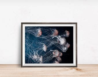 Sea Life Print, Sea Life Wall Art, Sea Life Decor, Sea Life Printable, Sea Life Art, Printable Wall Art - Instant Download