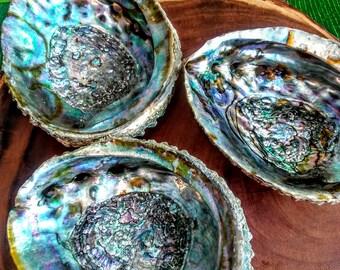 Abalone Shells- Smudge Shells