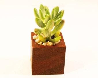 African Padauk Succulent Planter - Simple Is Better Collection