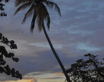 Palm tree at sunset (Marie Galante)